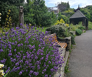 View of Park Gardens with the shelter and a bench in the background and a lavender plant in the foreground